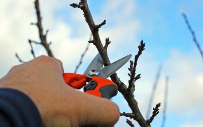 Jetzt ist der richtige Zeitpunkt für ihren Obstbaumschnitt