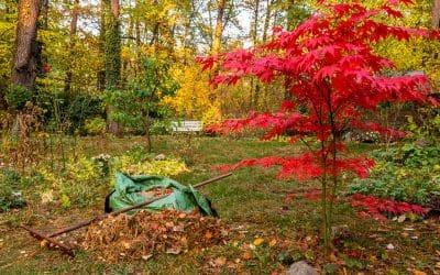 Finale im GartenPflanzen, Düngen, Schutz für Bäume und Beete
