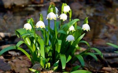 Die ersten Frühlingsmomente sind schon angekommen